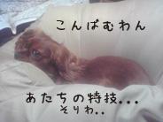 Image189.jpg