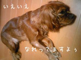 moko0808.jpg